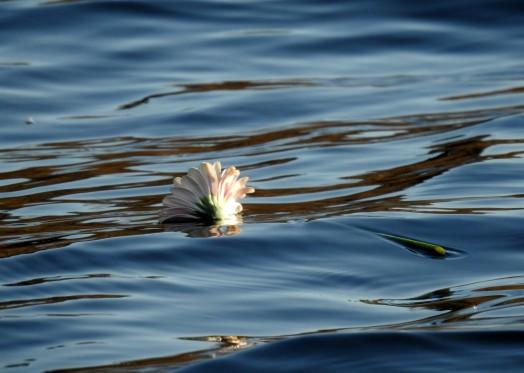Kukka meressä